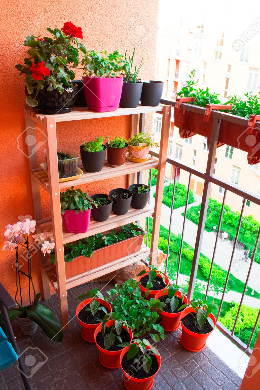 Small Herb And Flower Garden Built On Small Balcony Garden Stock ...