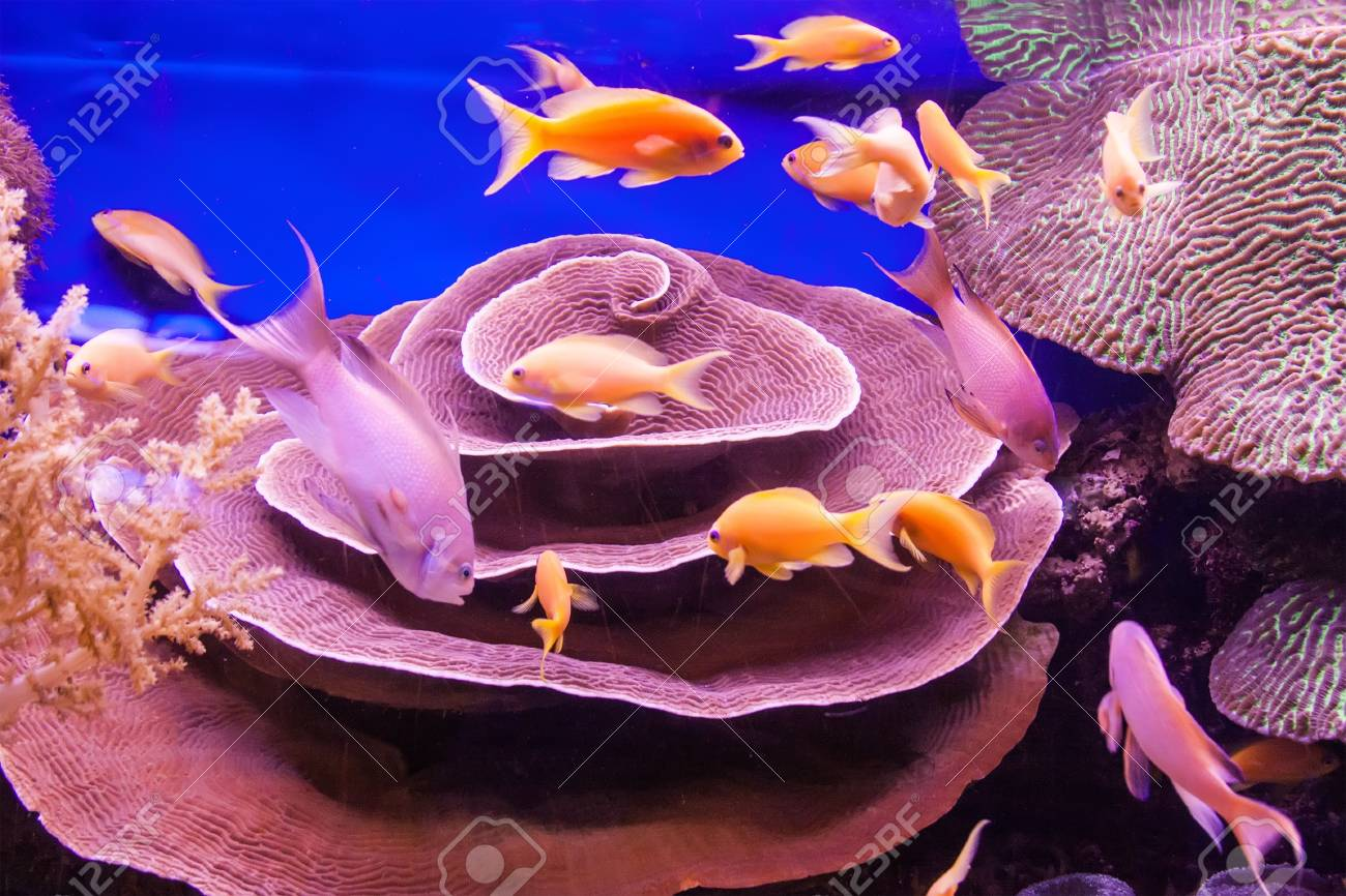 Aquarium coral reef Stock Photo - 21870336