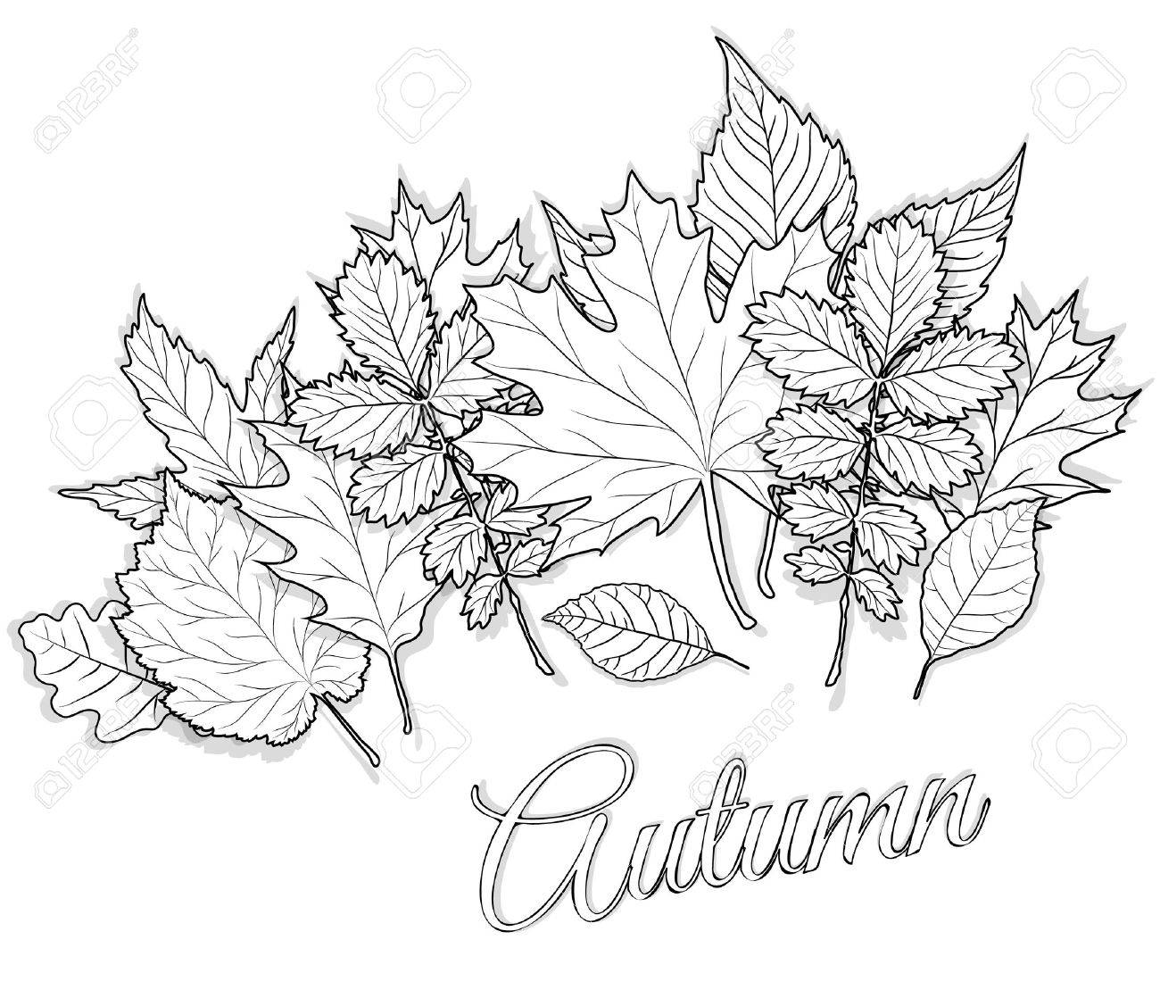 Herbst Blätter Gesetzt Für Färbung Seite Vektor Lizenzfrei Nutzbare ...