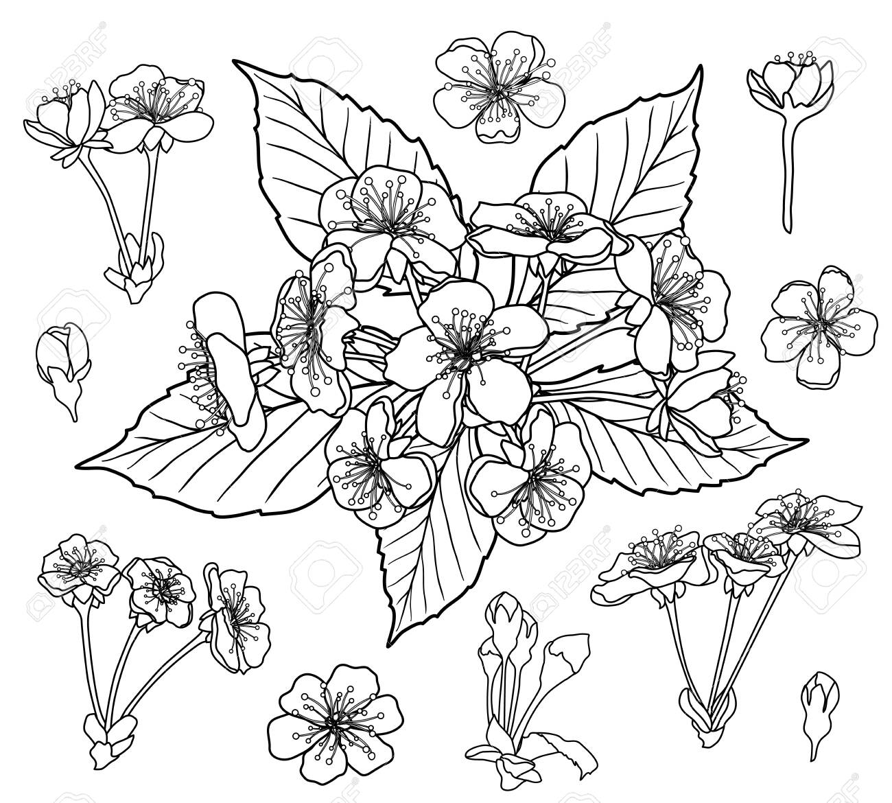 Black and white cherry flowers set for coloring book page vector - 121742066