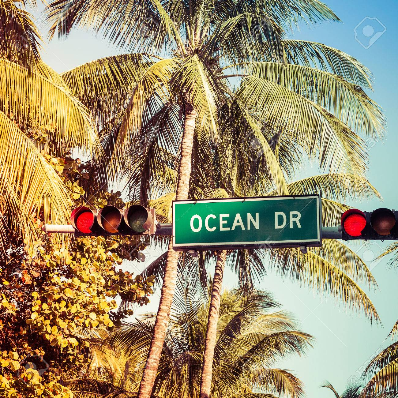 coconut palm trees and ocean drive street sign in miami beach