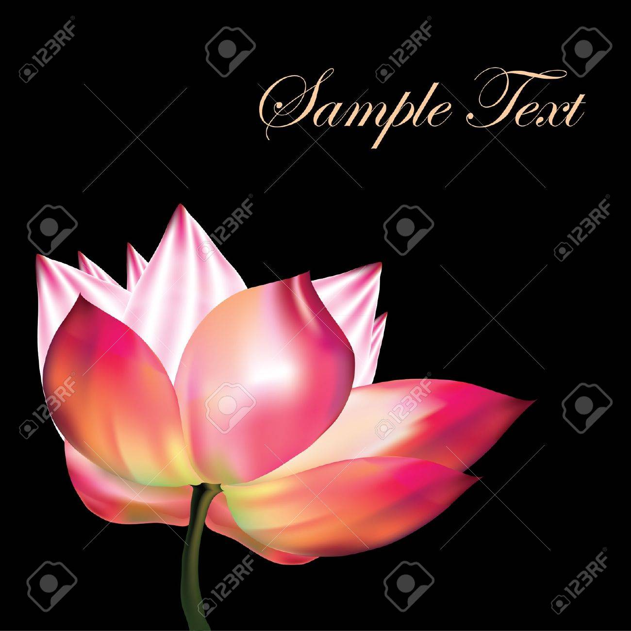 Pink lotus on black background Stock Vector - 15929444
