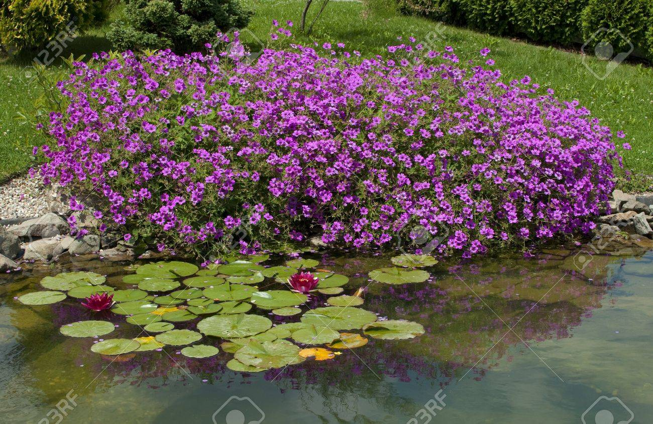 Small pond in the garden Stock Photo - 12951283