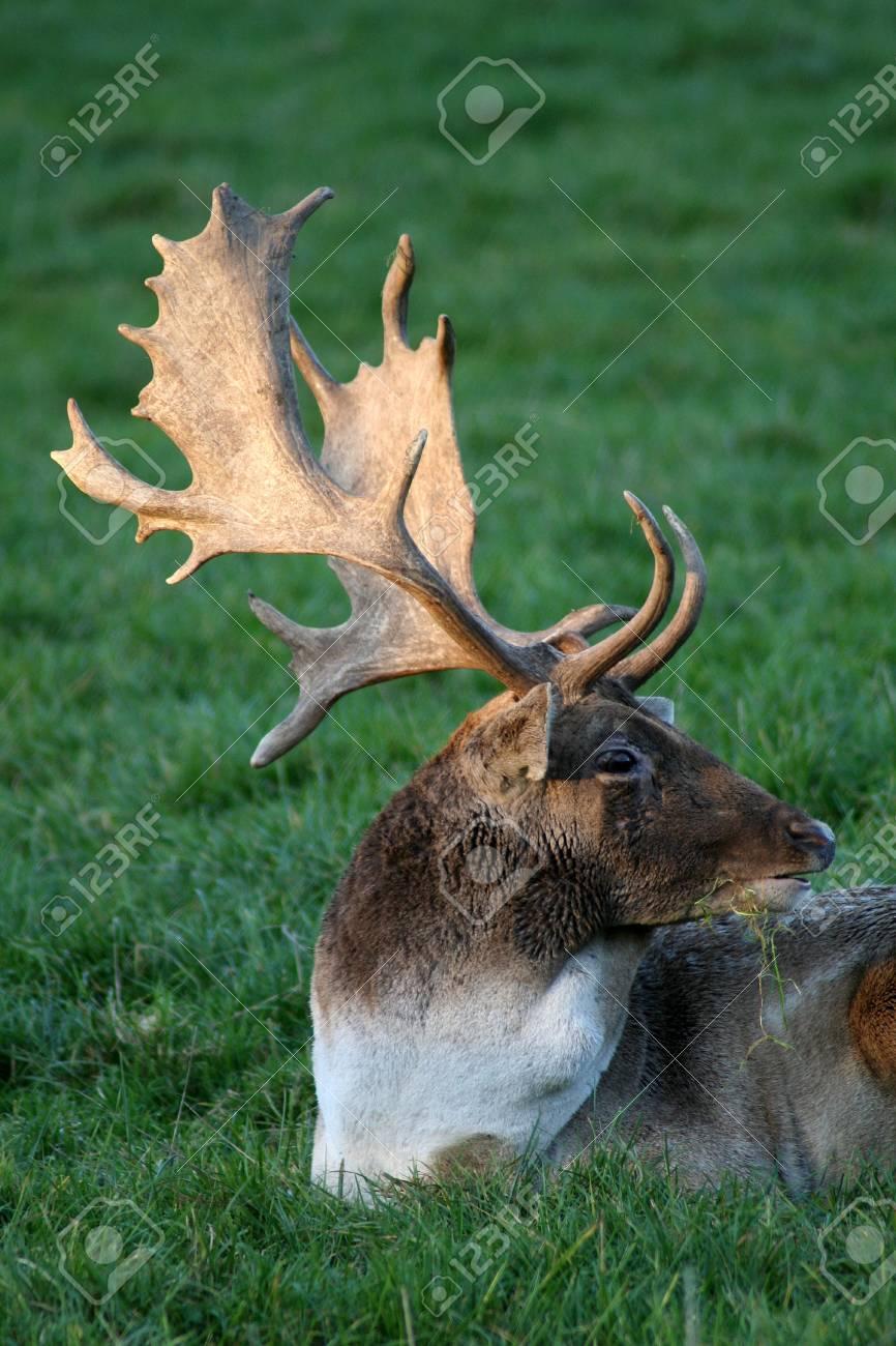 deer Stock Photo - 11834497