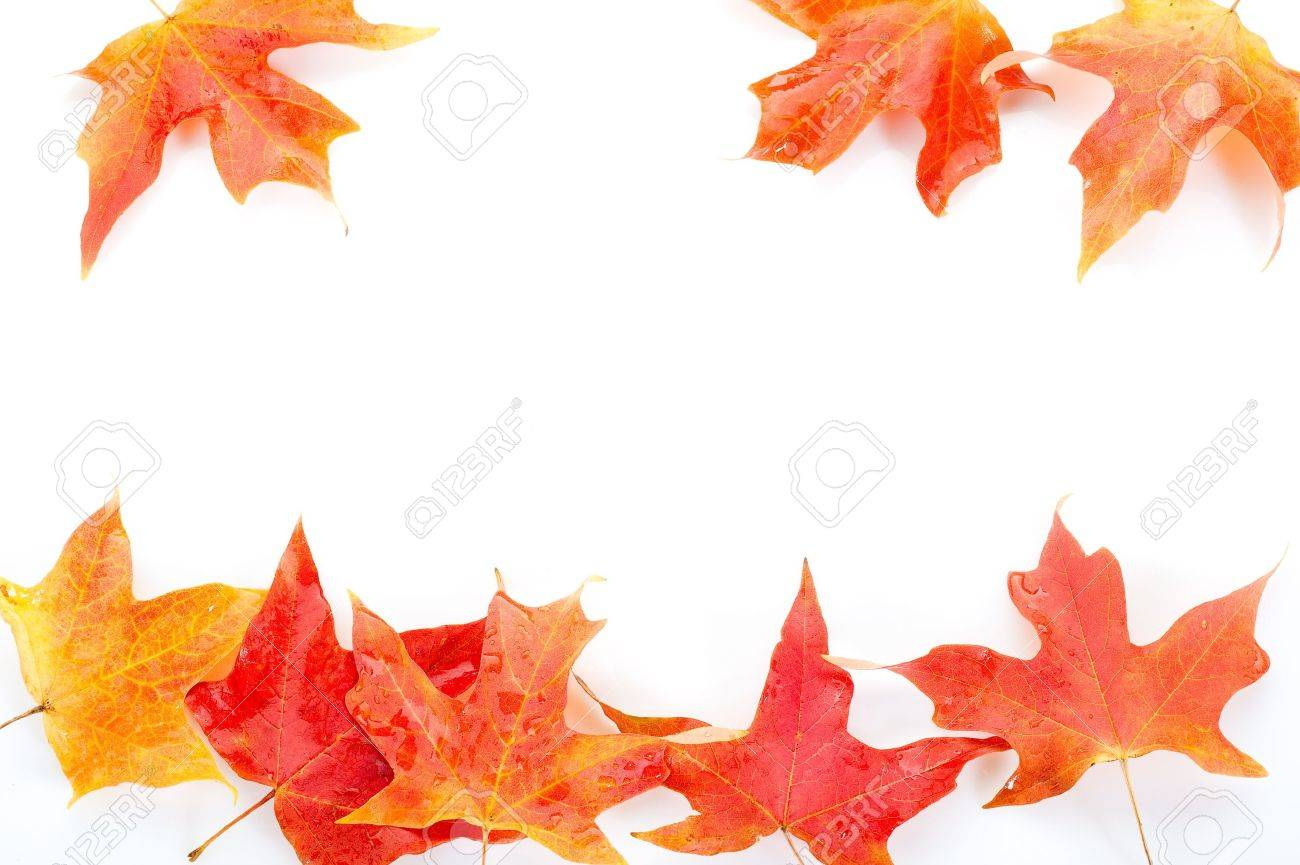 autumn leaves Stock Photo - 10353279