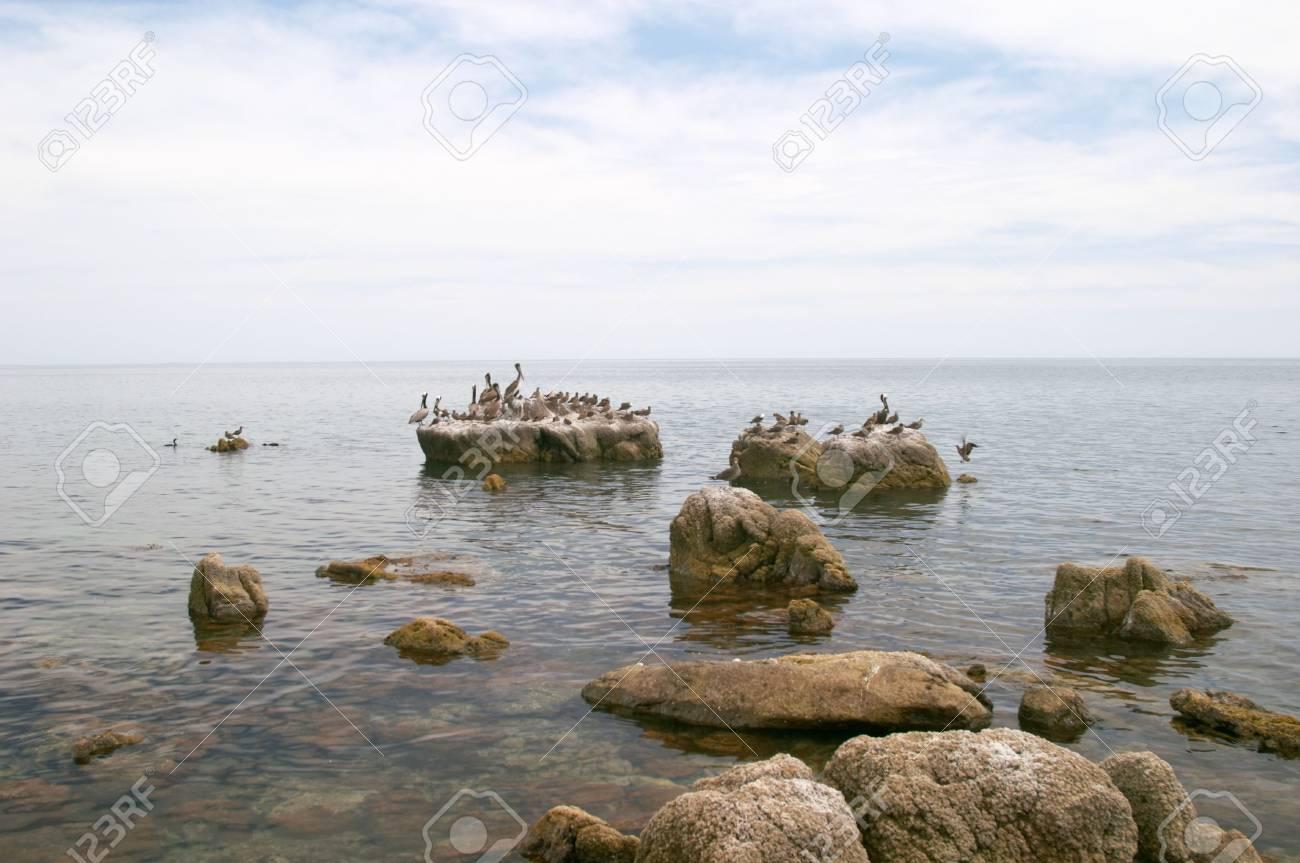 Marine birds, coast of Mar de Cortes, Baja California, Mexico Stock Photo - 456480
