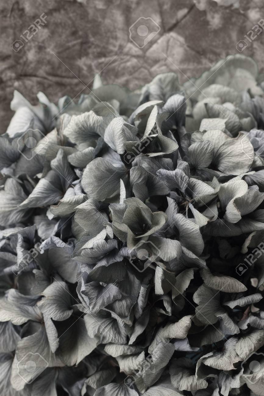 blue hydrangea flower Stock Photo - 13275735