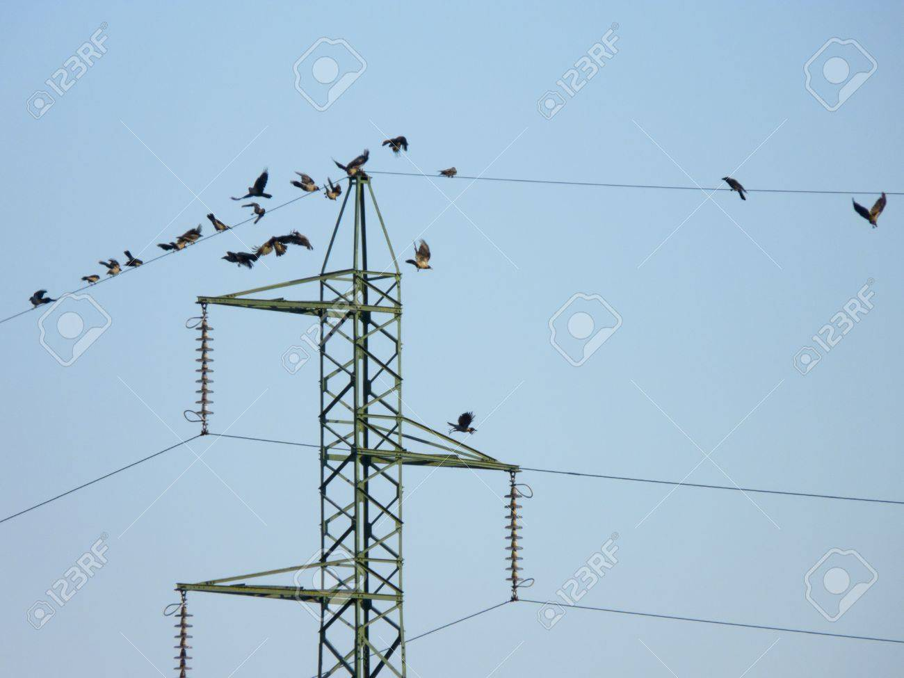 many crow birds flying on the electric wires stock photo picture rh 123rf com Electrical Cord Electrical Wire Size Chart
