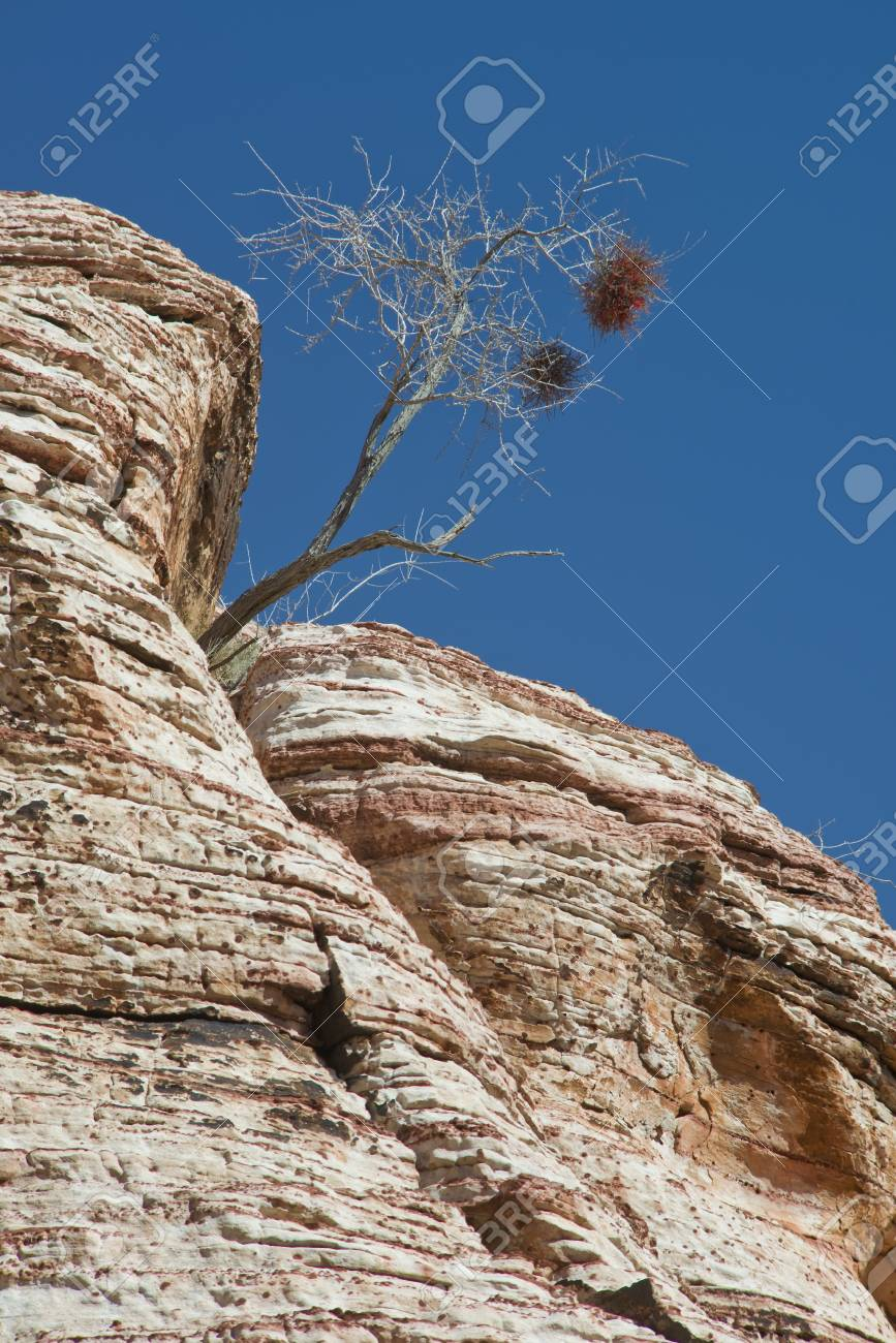 A lone tree growing in solid rock Stock Photo - 18704813