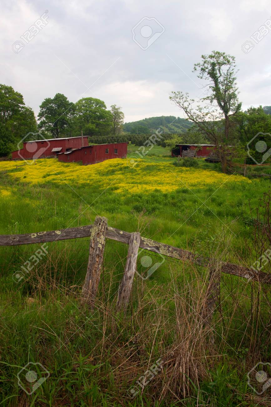 A pair of red sheds in a field of buttercup flowers Stock Photo - 40559766