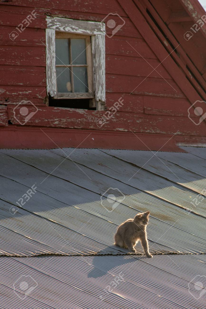 Cat on a tin roof of a red barn Stock Photo - 74449297