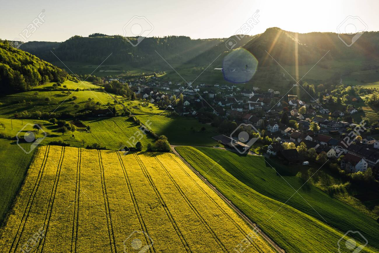 aerial overview of countryside during golden hour with yellow flowers in a small village, Field of rapeseed in full flower, spring time in countryside switzerland - 135359819