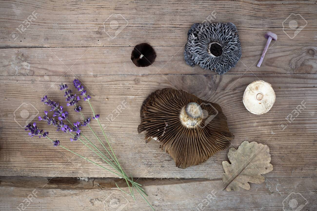 Autumn items lavender, fungi, brown leaf on the wooden desk - 130736092