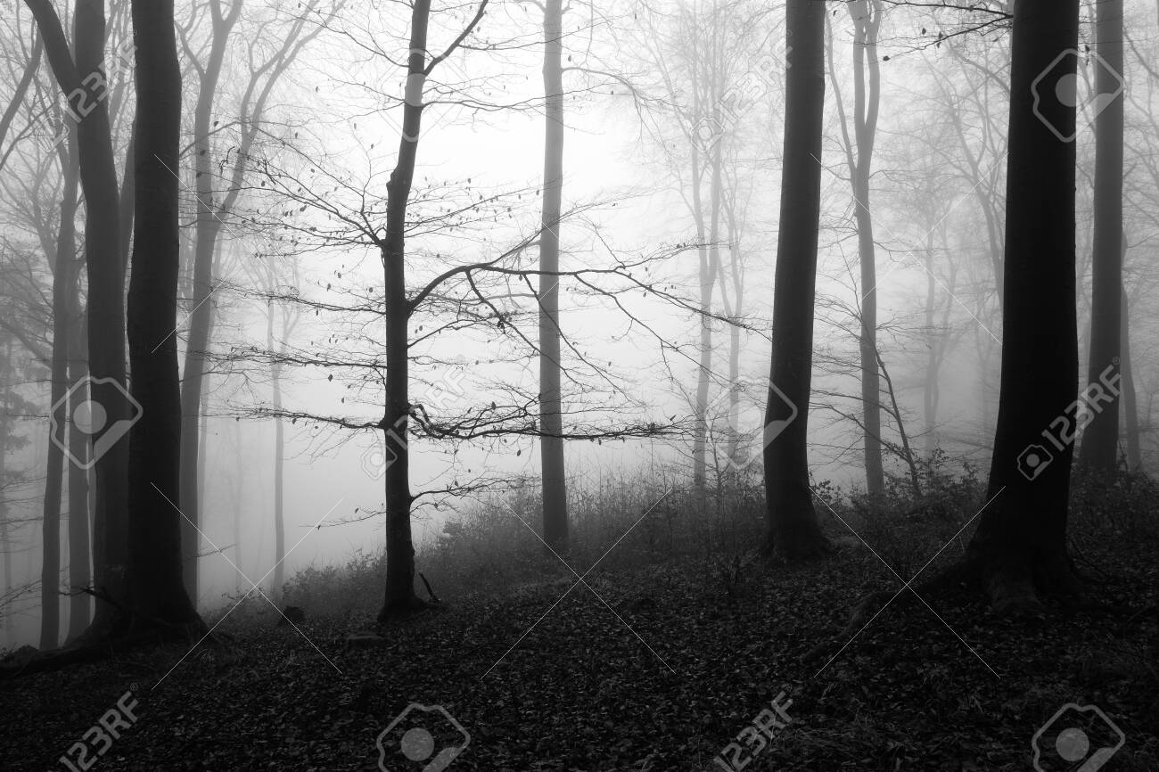 Black and white winter forest, no snow, foggy background, leftover leaves on branches and ground - 136411696