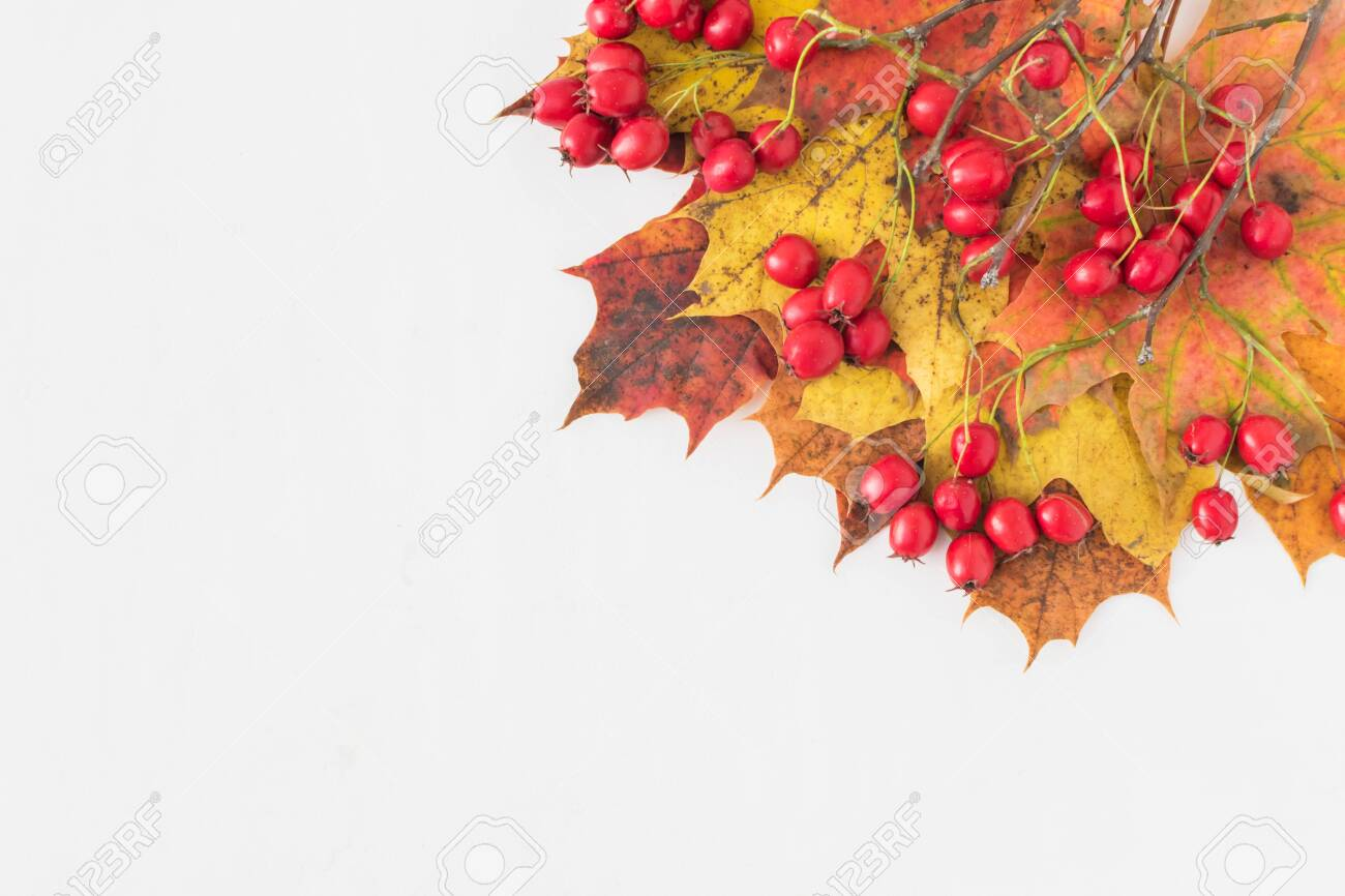 Image result for Autumn leaves and holly