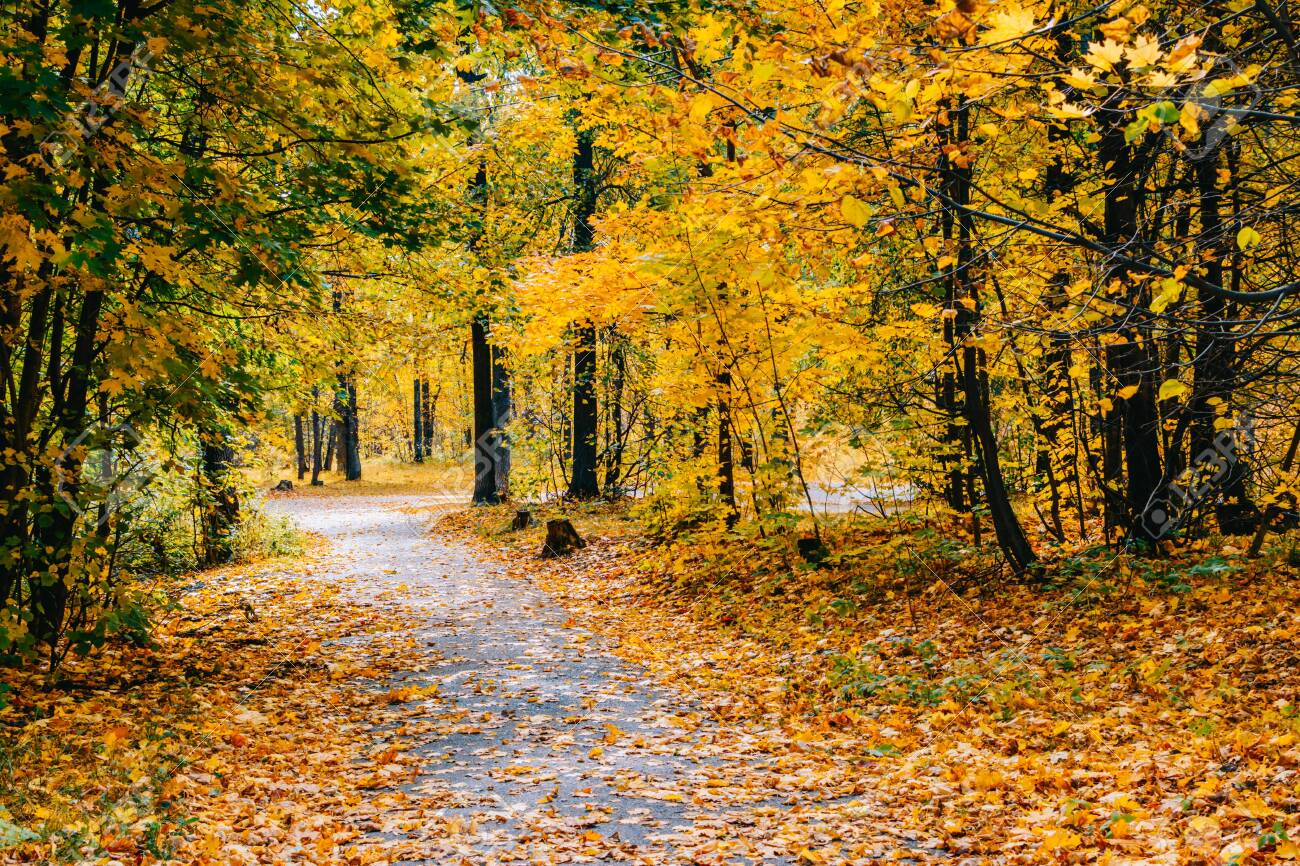 Footpath in the autumn park with colorful trees and leaves - 154858779