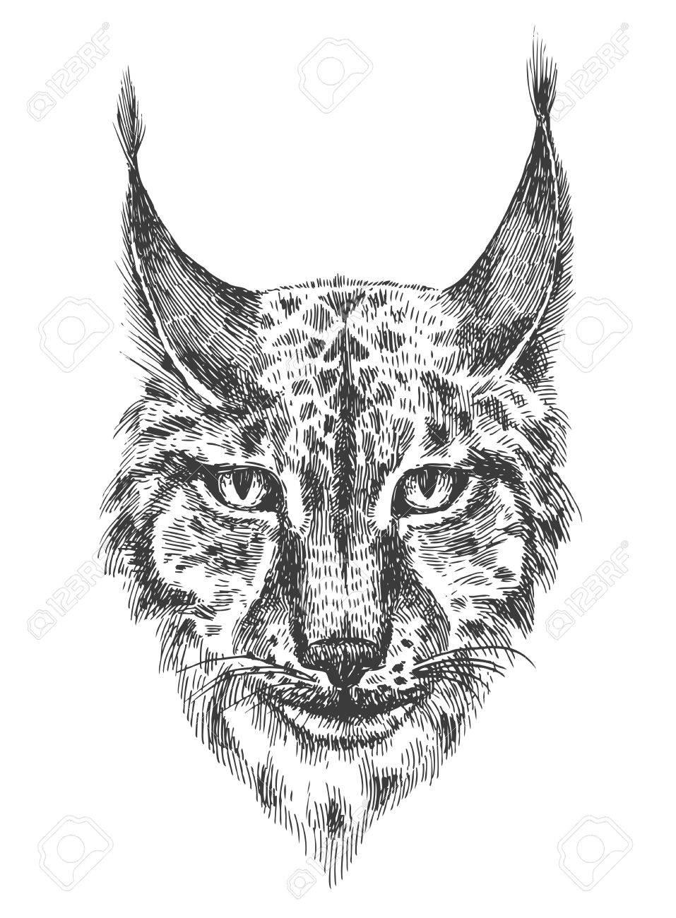 Chef Du Beau Lynx Illustration En Noir Et Blanc Avec Tete De Chat Sauvage Aux Dents Nues Dessin Dessine A La Main Peinture A L Encre Element De Conception Utile Pour L Impression Pour