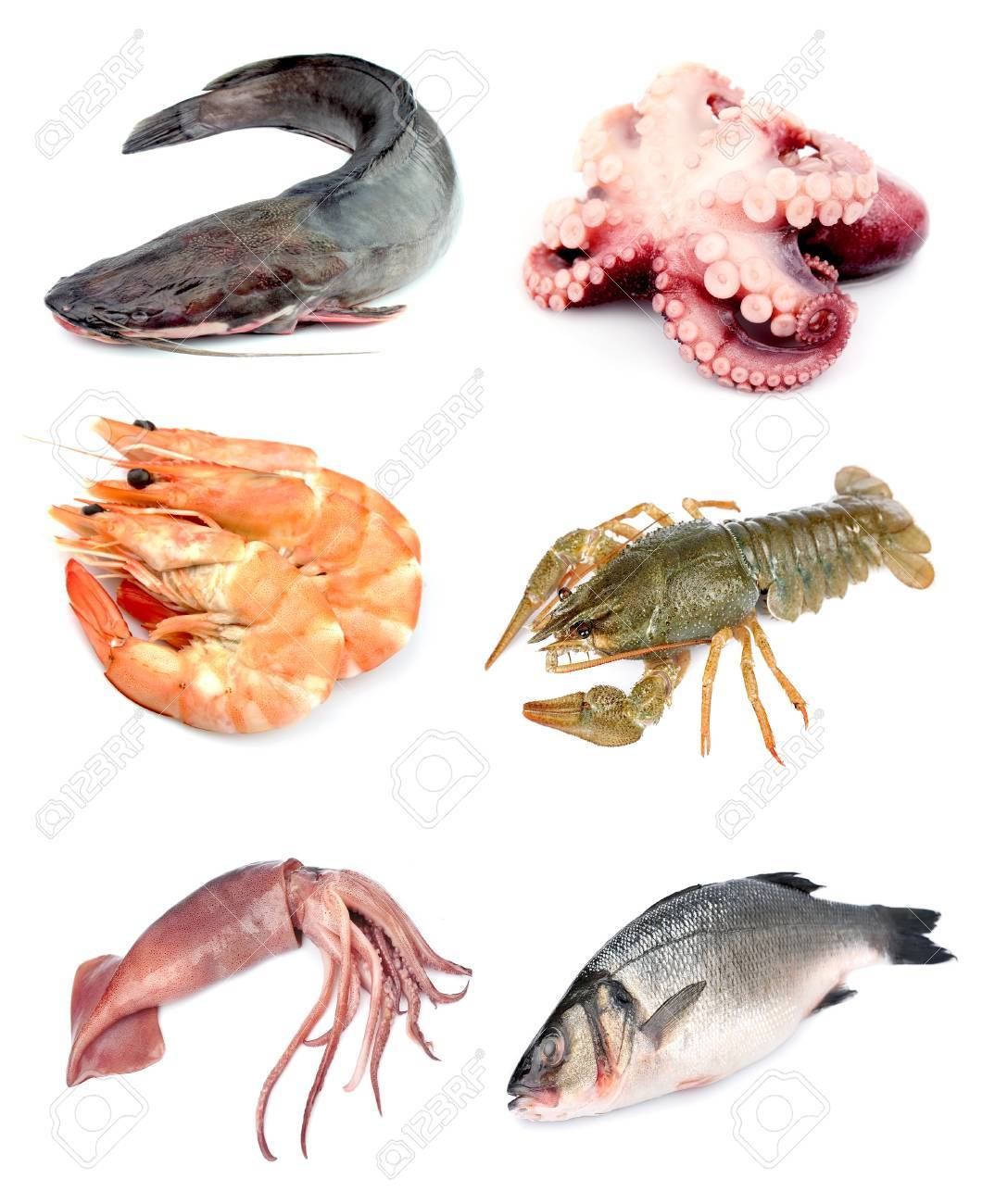 Collection of seafood on white background Stock Photo - 15845395