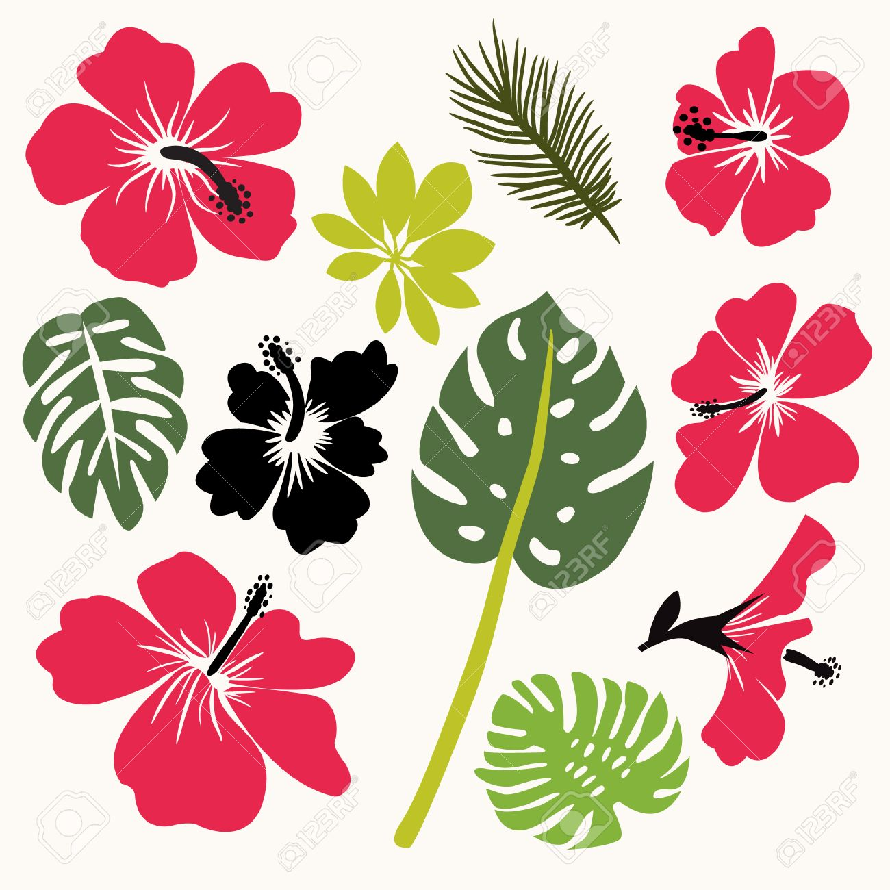 set of tropical leaves and flowers hibiscus flower hawaii isolated rh 123rf com hawaiian hibiscus flower vector hawaiian flower frame vector