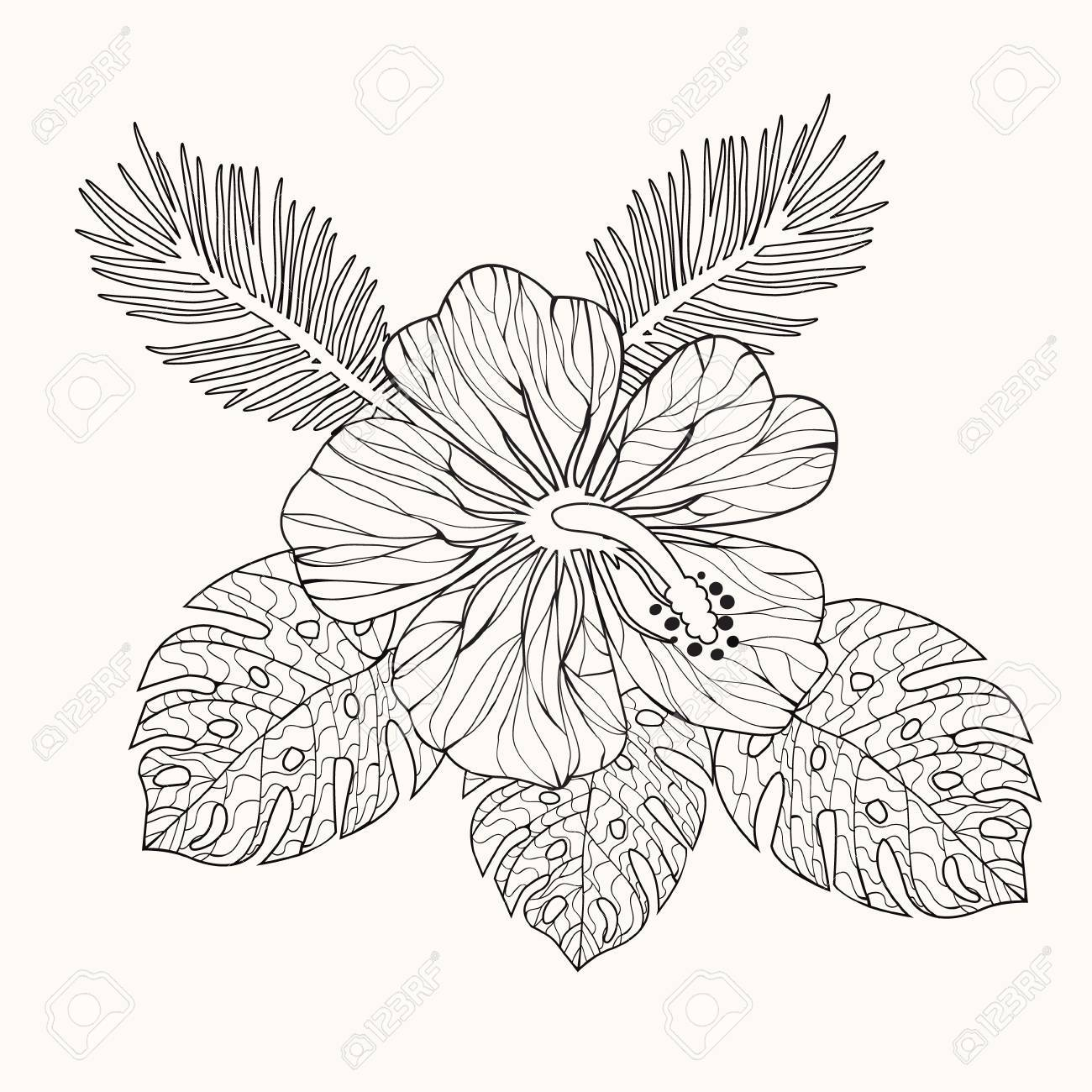 Vector Hibiscus Flower And Leaves Hand Drawn In Black And White