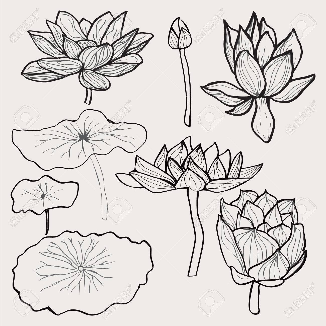 Vector Conjunto De Hermosas Flores En Blanco Y Negro Y Las Hojas De ...