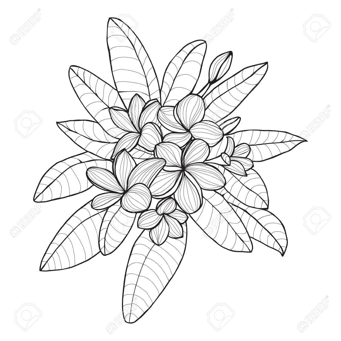 Bouquet Avec Plumeria Ou D Une Fleur De Frangipanier Sur Fond Blanc