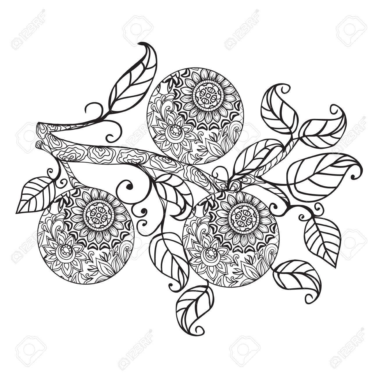 Vektor Zitrusfrüchte Orange Essen Orange Und Blätter Von Hand