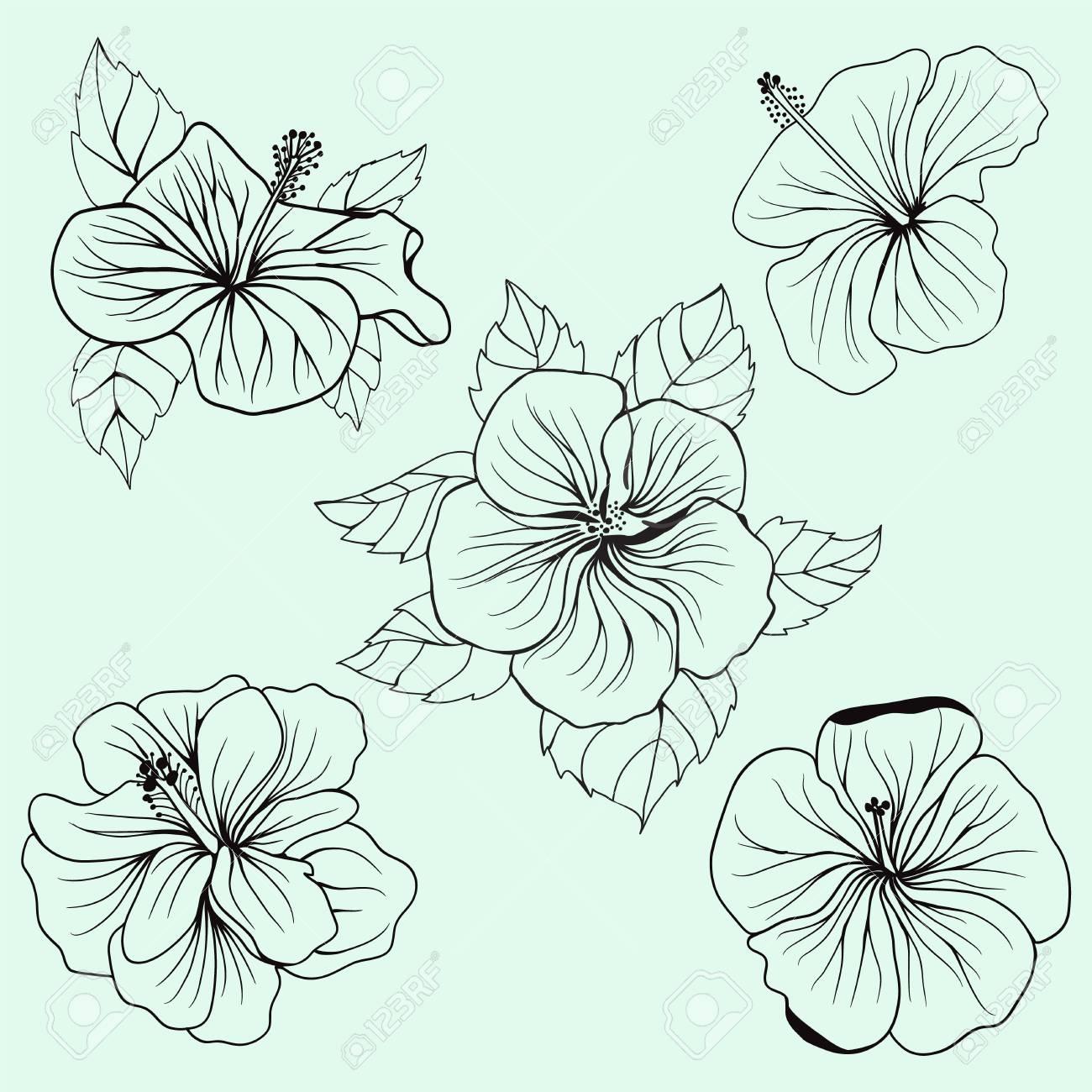 Set Von Hawaii Hibiskus-Blume, Blatt Für Malbuch Seite Für ...