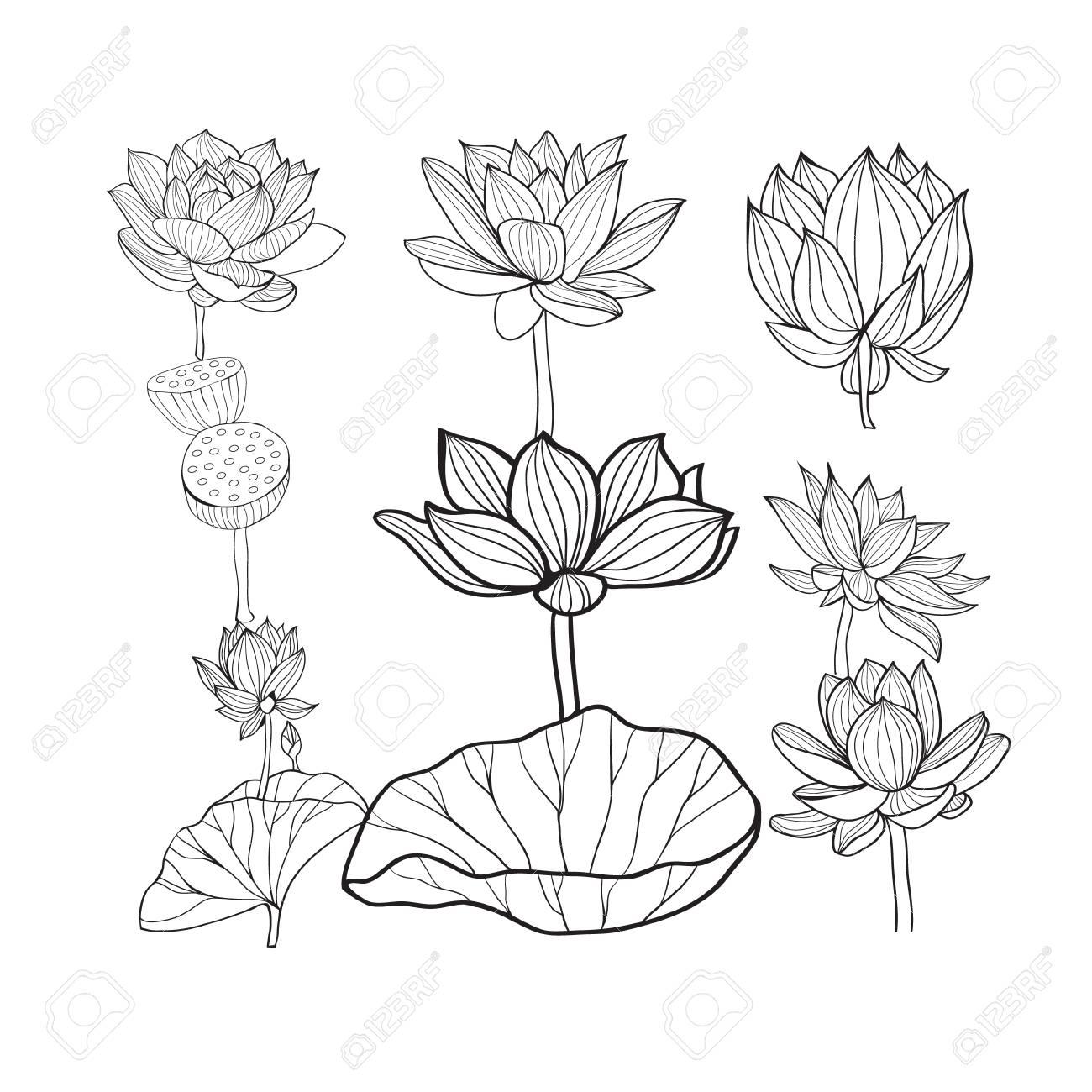 Set of beautiful monochrome hand drawn lotus flowers and leaves set of beautiful monochrome hand drawn lotus flowers and leaves sketch floral collection in black izmirmasajfo