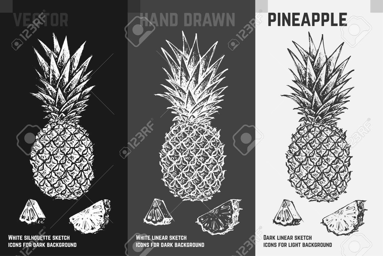 Hand Drawn Pineapple Icons Set Isolated On White Gray And Black