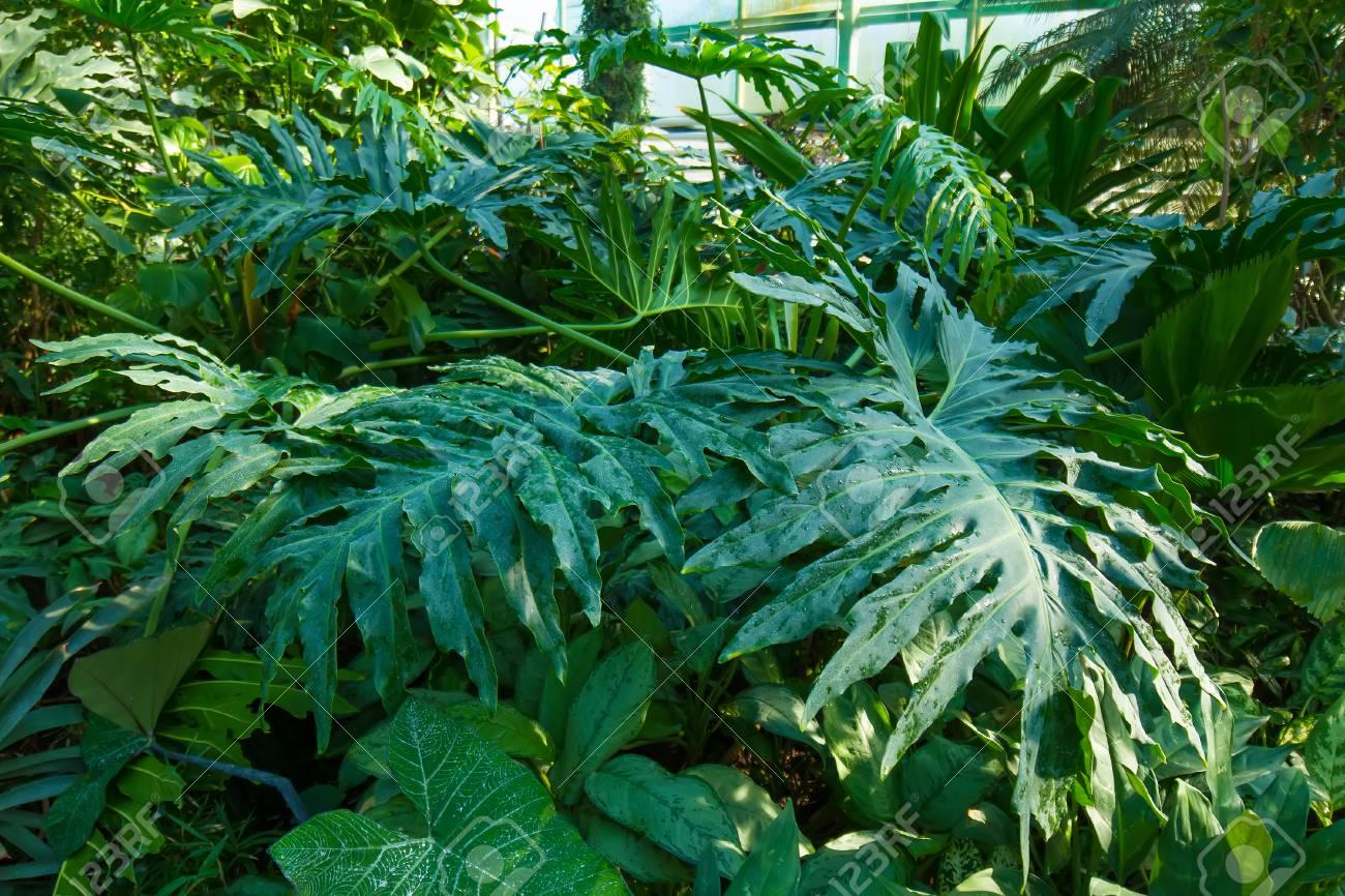 Tropischer Garten Im Gewächshaus. Verschiedene Tropische Pflanzen ...