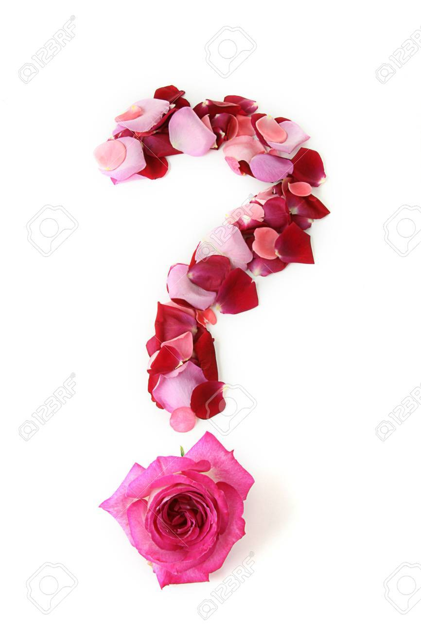 question mark in rose petals Stock Photo - 4924627