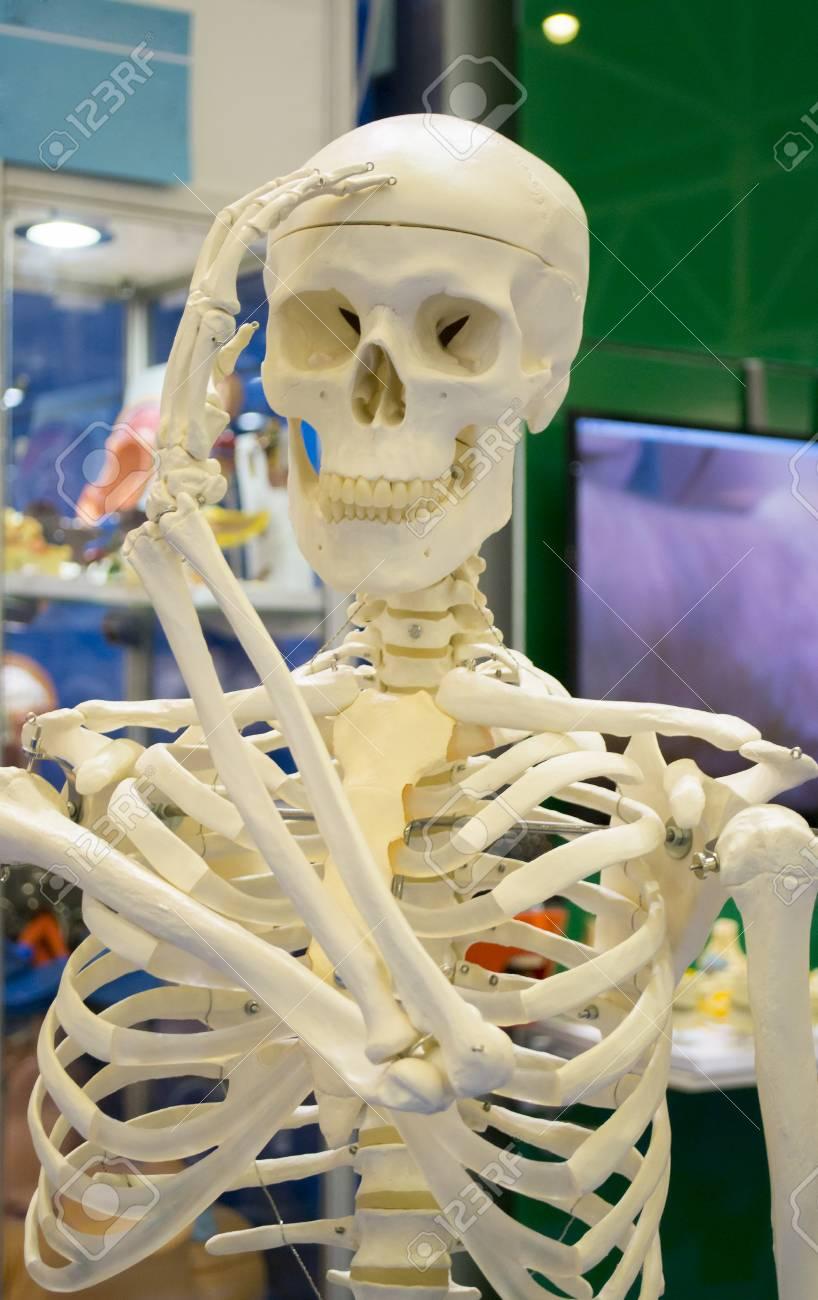 Tolle Anatomie Und Physiologie Knochen Und Skelettgewebe Bilder ...