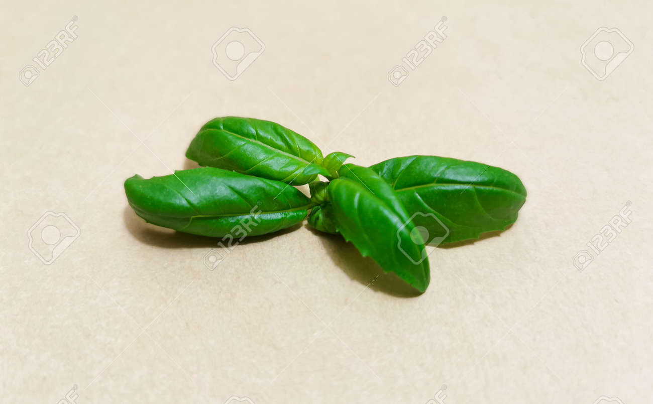 Closeup of basil leaves on light background - 160790360