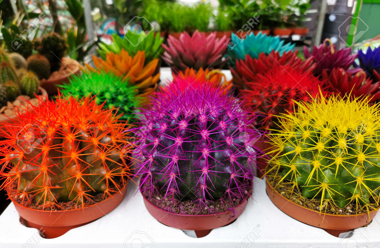 A group of colorful cacti - 162161280