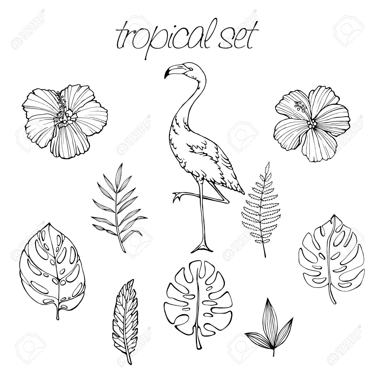 Vector Tropical Set Of Tropical Elements Palm Leaves Tropical Royalty Free Cliparts Vectors And Stock Illustration Image 93056427 Here presented 62+ tropical leaf drawing images for free to download, print or share. vector tropical set of tropical elements palm leaves tropical