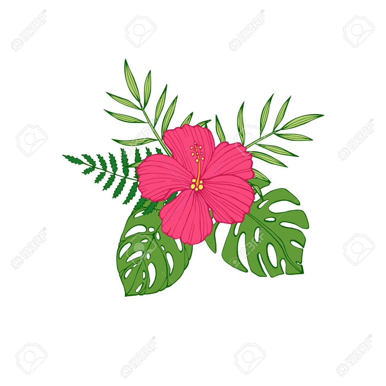 Hibisco De Flores Tropicales Protea Plumeria Ave Del Paraiso Y