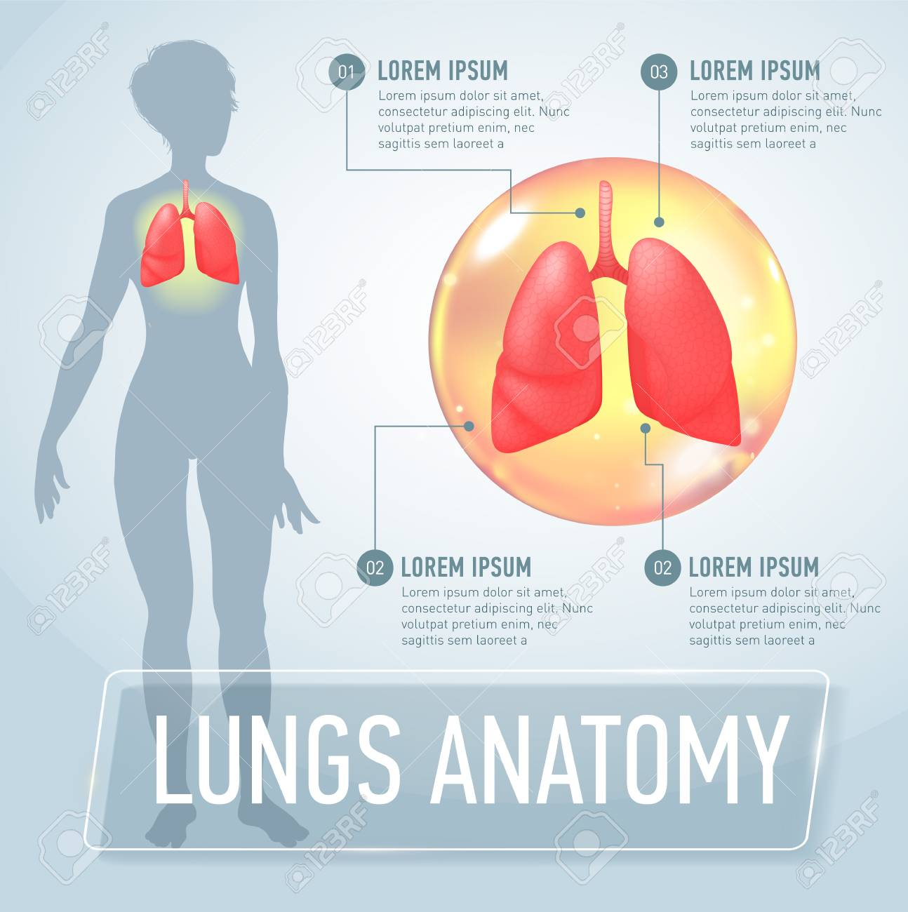 Lung Modern Medical Infographics Internal Organs In A Female