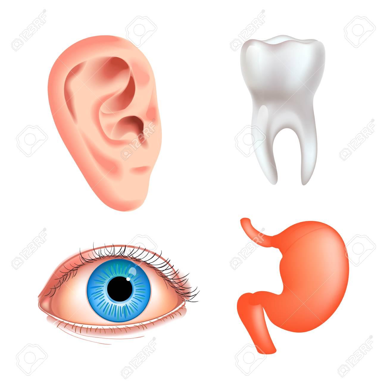 Vector Internal Organs Icon Set Human Reproductive System