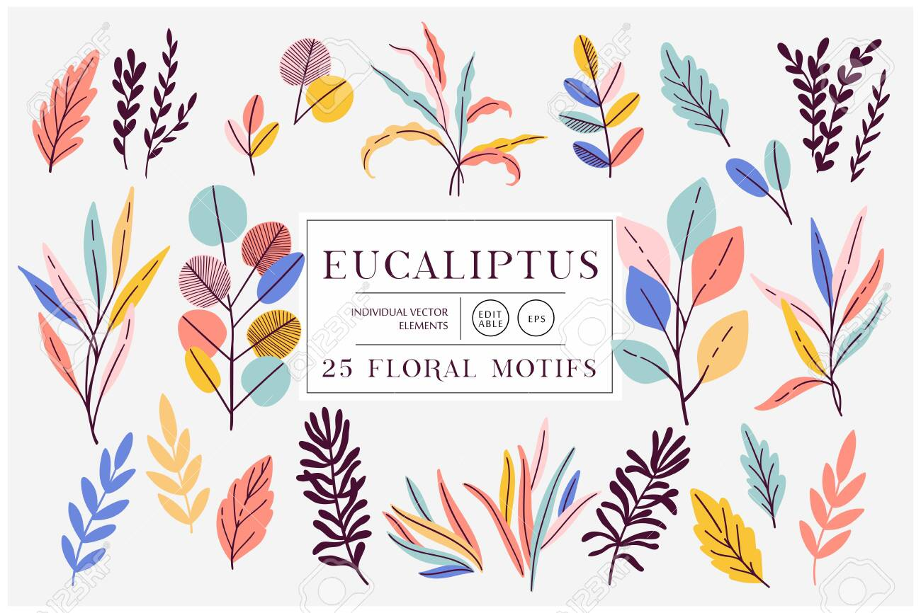 Eucaliptus set isolated on bright background. Vector modern design for t-shirt,print material,cloth and textile. For invite and wedding card,wallpaper,poster,greeting card - 145775837
