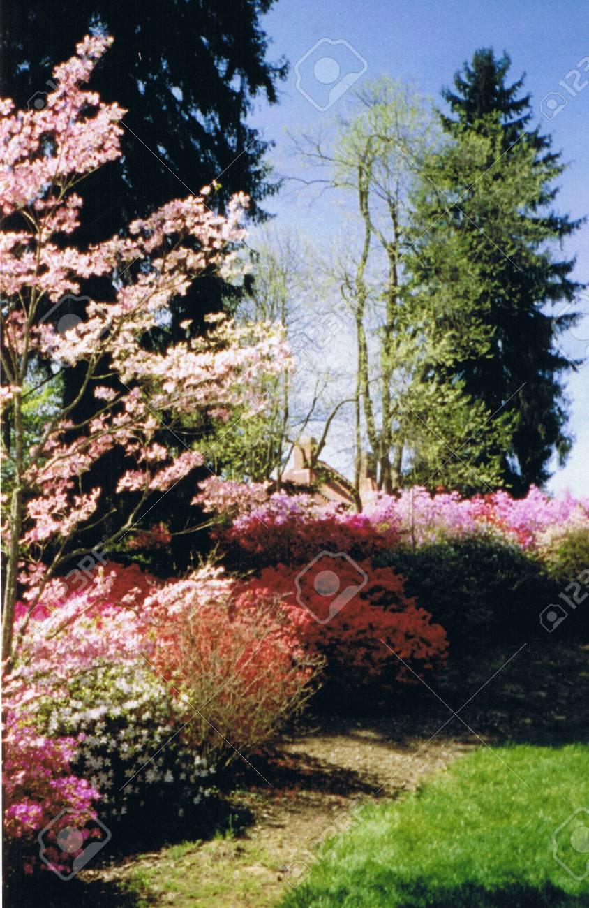 Azaleas at Biltmore Estate Stock Photo - 1416366