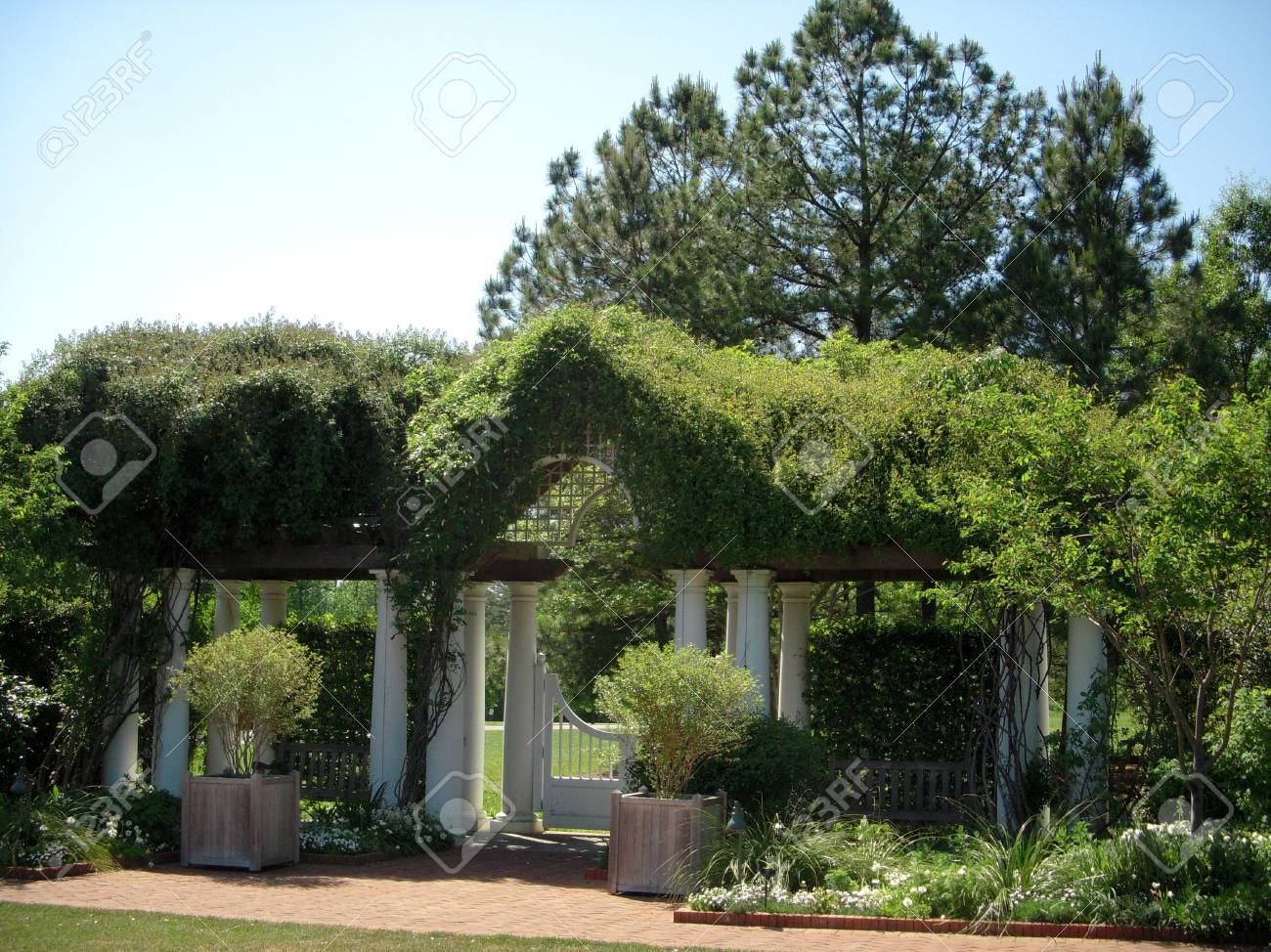 Vine-covered arbor Stock Photo - 4756256