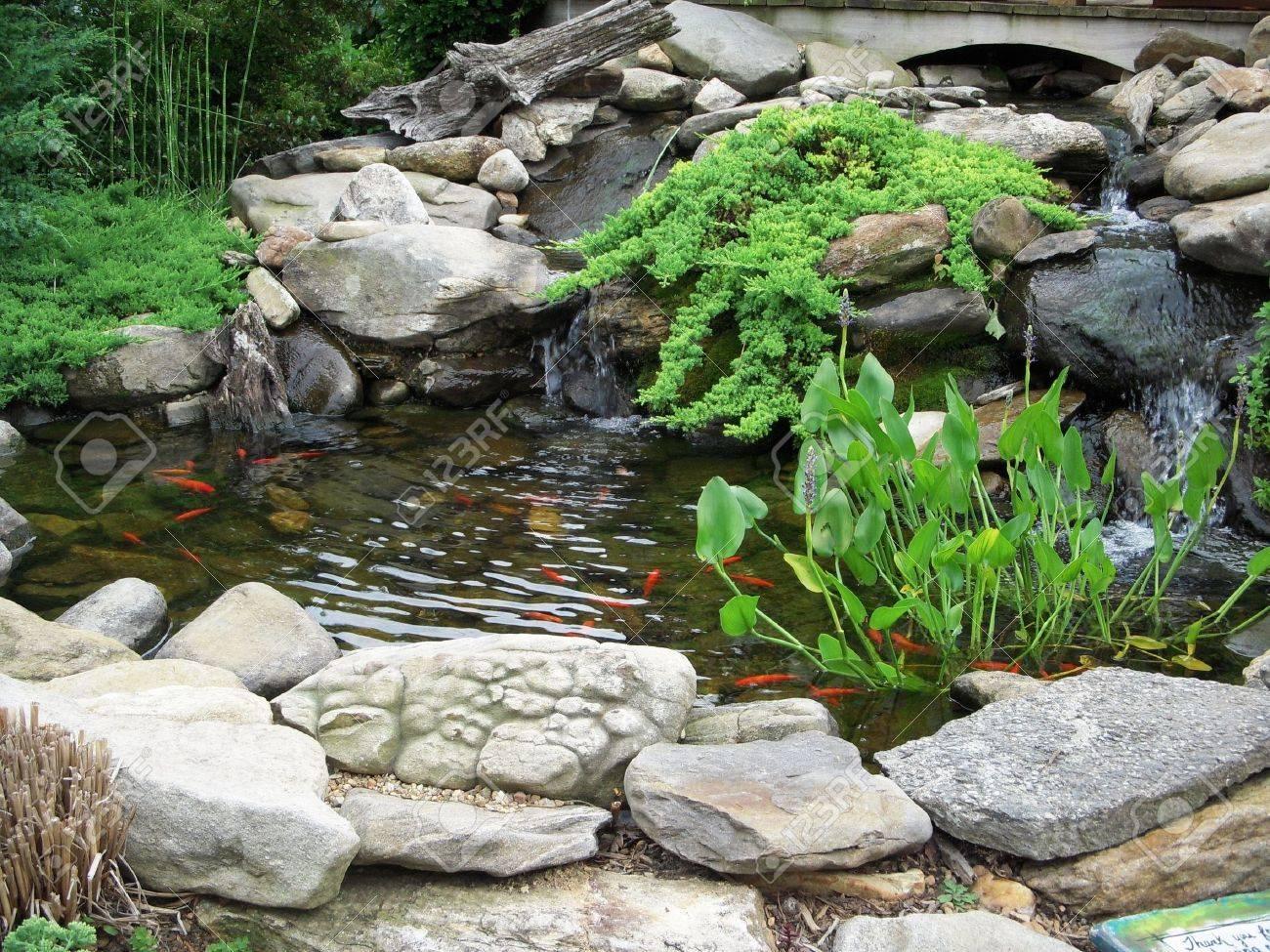 Koi pond Stock Photo - 7173544