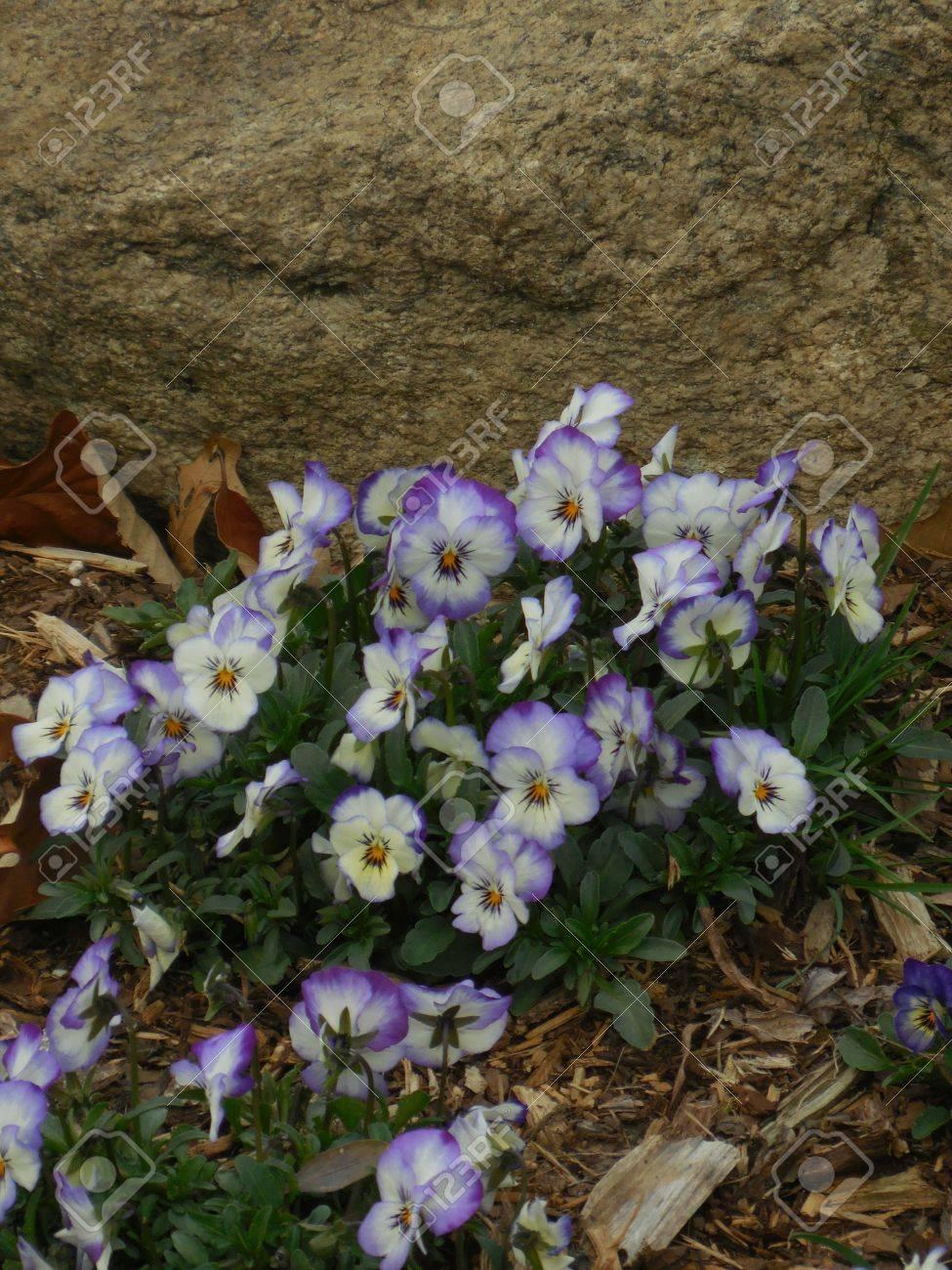 Purple flowers Stock Photo - 79150031