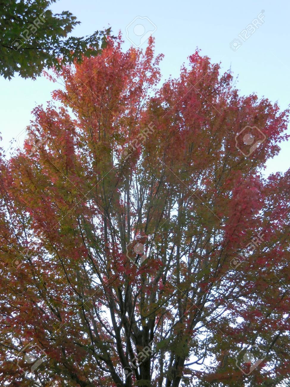 Autumn tree Stock Photo - 88607226