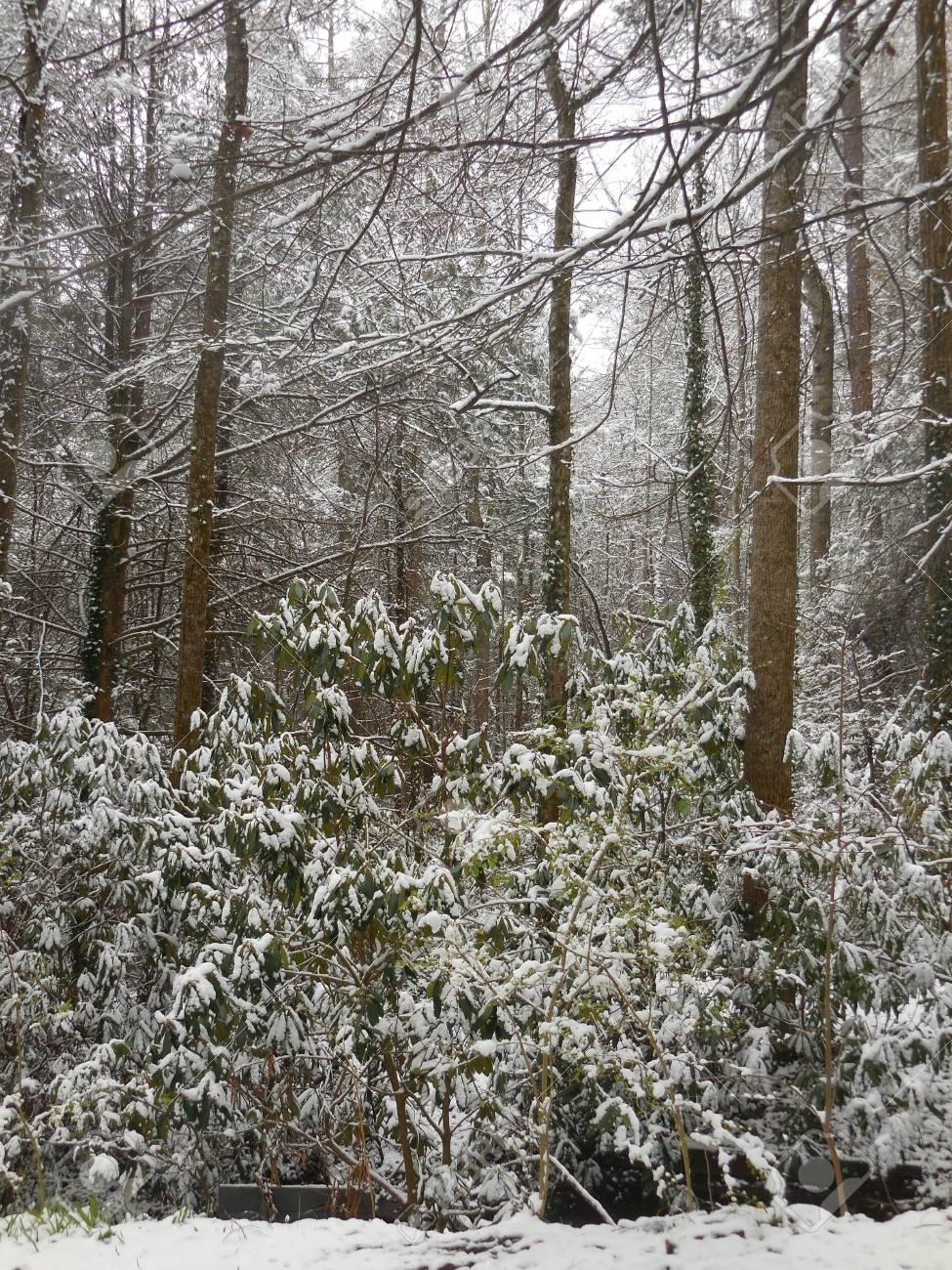 Winter trees Stock Photo - 88603385