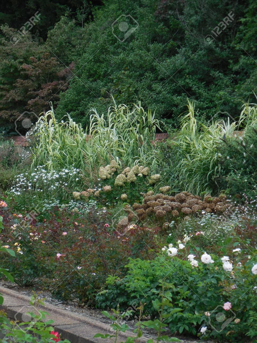 Flower garden Stock Photo - 88603399