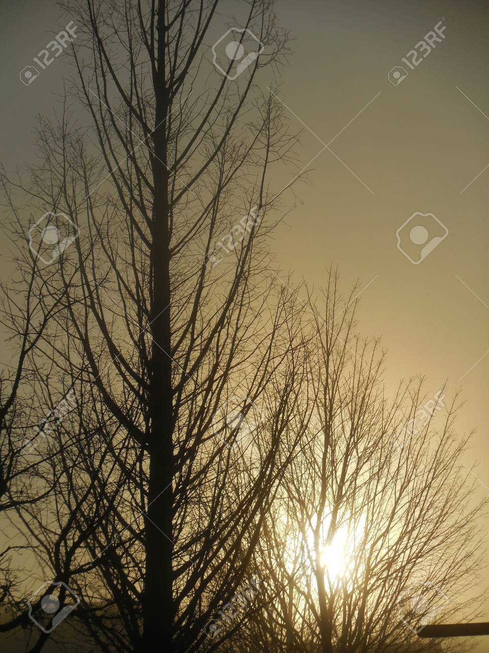 Trees at sunrise Stock Photo - 88603400