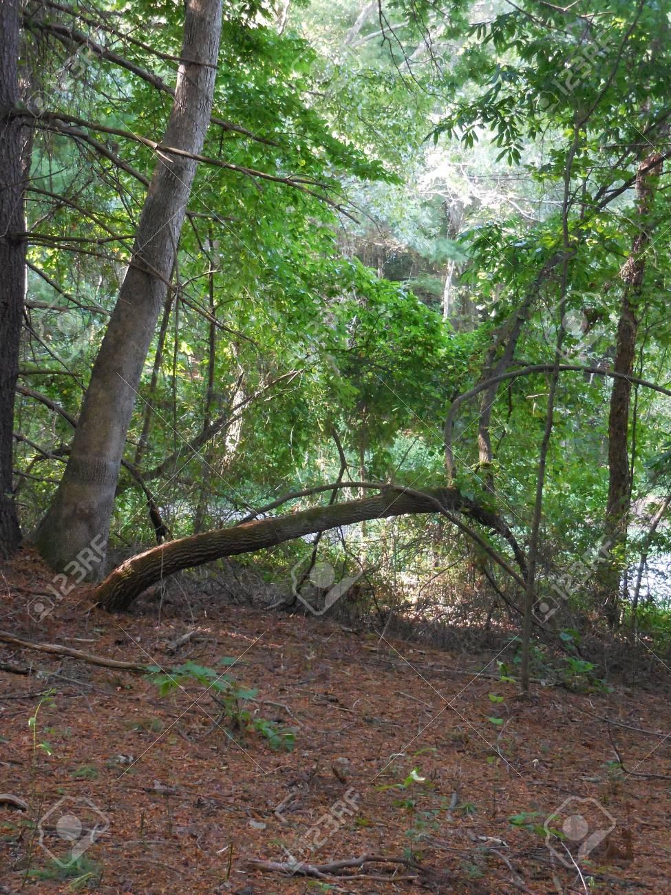 Arching tree Stock Photo - 88607228