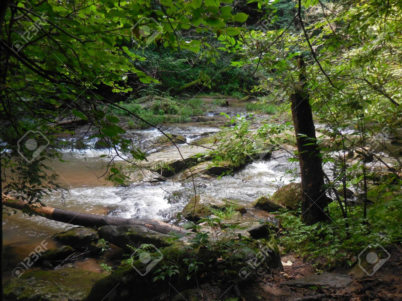 Creek Stock Photo - 88607235